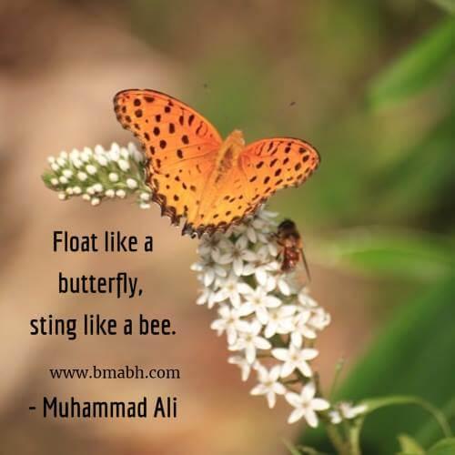Float like a butterfly, sting like a bee